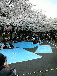 満開の上野公園の桜